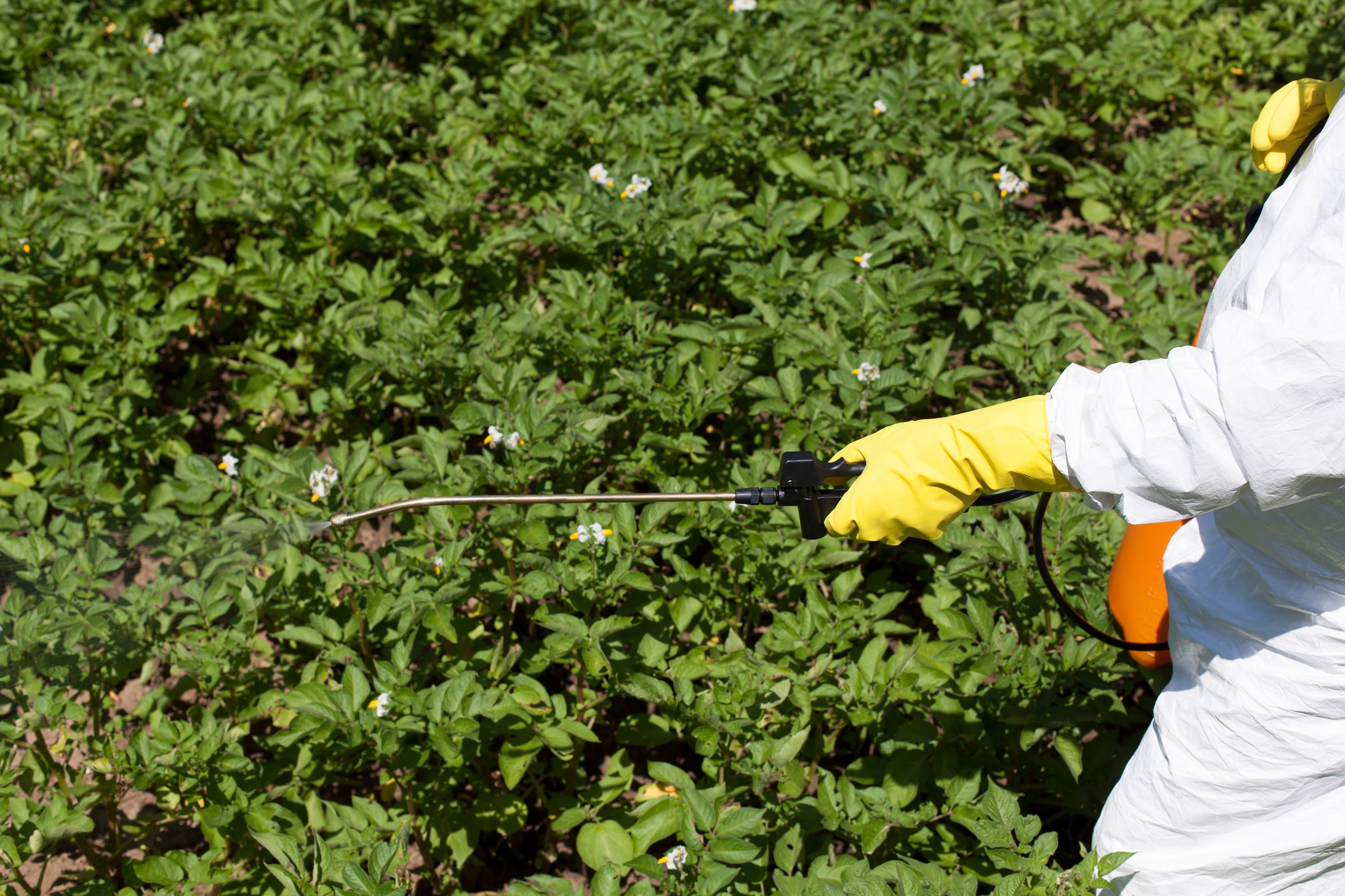 Man spraying pesticide on bushes